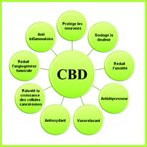 les effets du CBD